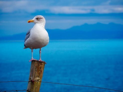 seagull-1900657_640