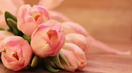 tulips-2068692_960_720